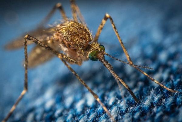 tejidos anti mosquitos