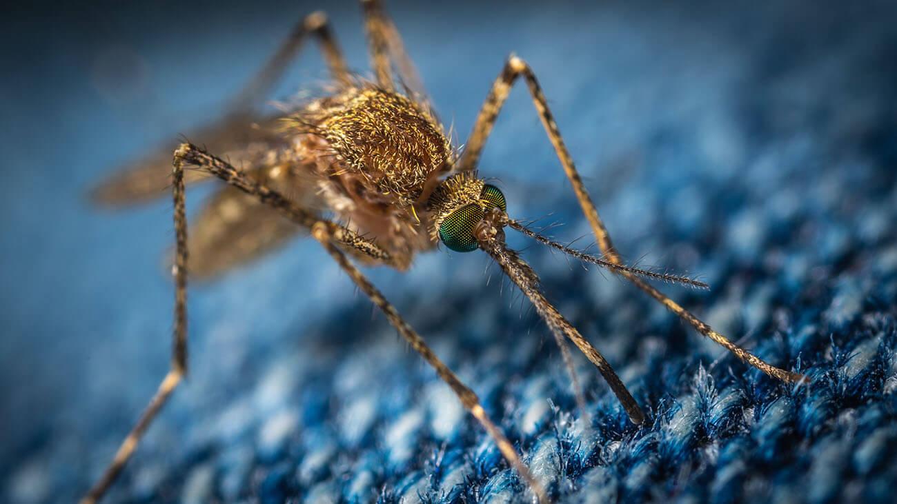Mosquito repellent fabrics